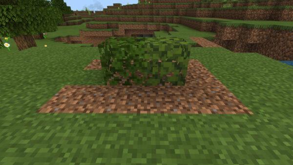 ツツジの葉と樫の葉の比較