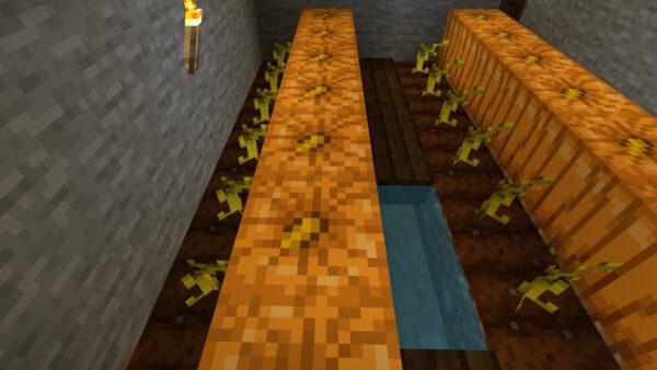 カボチャの栽培方法